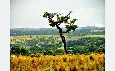 BNP Paribas strengthens policy on beef and soy-driven deforestation in Brazil
