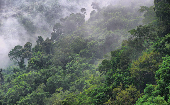 Investors representing $500bn call on firms to beef up forest protection