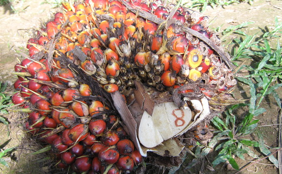 Palm oil production is associated with forestry destruction in some parts of the world