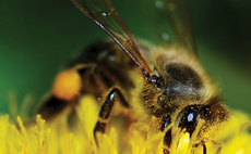 The UK's pollinator population has been in a state of overall decline since 1987