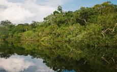 'Forest Allies': Kingfisher and Rainforest Alliance team up for tropical forest conservation
