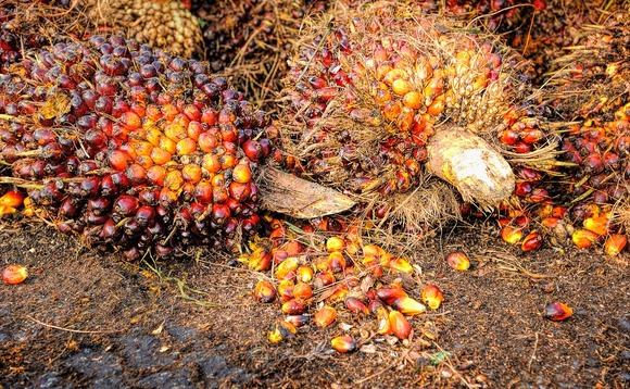 Growing demand for palm oil has been found to fuel deforestation in parts of Asia | Credit: tristantan