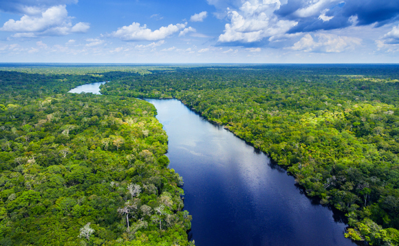 The Brazilian Amazon is being cut down at its fastest rate in years | Credit: Mantaphoto