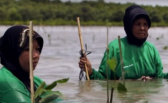 The first Livelihoods Carbon Fund helped villagers plant 18 million mangroves in Sumatra