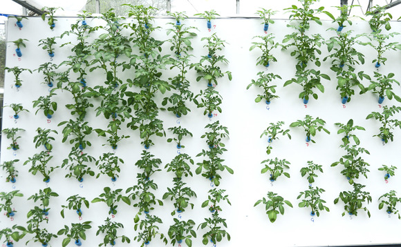 Airponix technology creates a fine mist of water and nutrients, capable of growing staple crops such as potatoes
