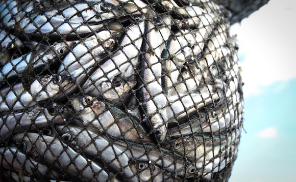 UK could create 5,000 jobs by moving to sustainable fishing, says report