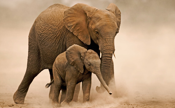 An African elephant with her young calf in Amboseli National Park, Kenya| Credit: Martin Harvey / WWF