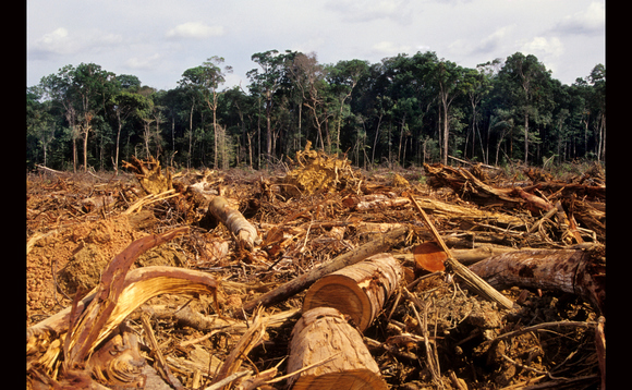 Deforestation is a major contributor to climate change