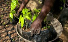 Cargill beefs up pledge to end cocoa deforestation