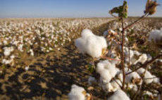 Primark: Sustainable cotton weaves together profit boost and environmental savings