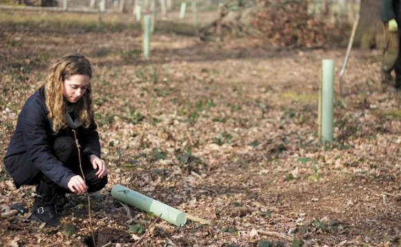 Carbon market boost: Government launches latest £10m tree-planting auction