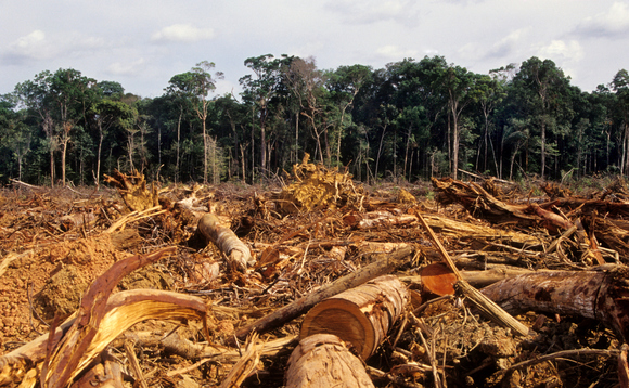 'Turning a blind eye': Are global brands 'ignoring' deforestation?