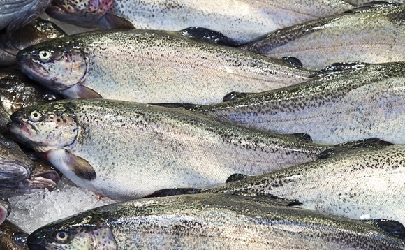 Greenpeace welcomes sustainable seafood progress from US food retailers