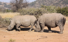 How can a wireless network help both rhino resilience and water quality?