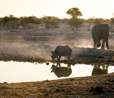 Global biodiversity and climate projects secure £100m UK aid boost