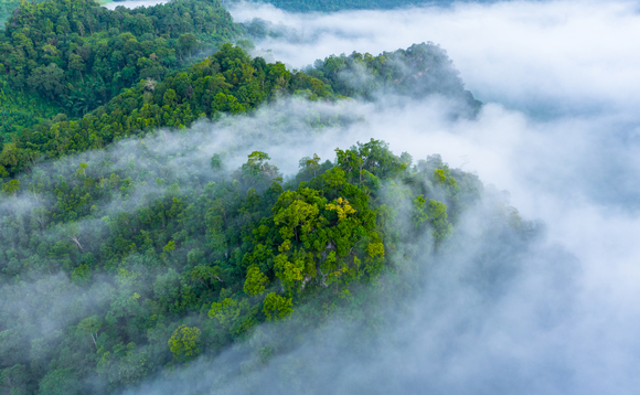 Reforestation projects in Uganda and Myanmar will be the first developed by the partners | Credit: Velux