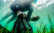 Could seagrass save us? WWF launches massive marine restoration scheme