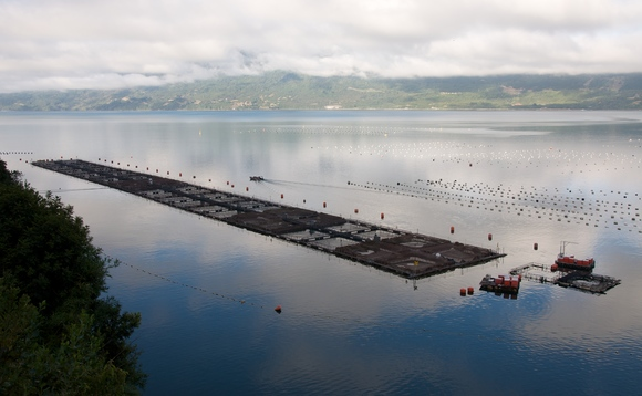 Farmed salmon pens. Credit: Sam Beebe