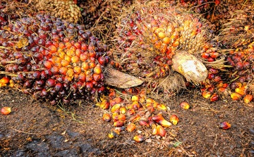 PepsiCo applies strengthened palm oil rules to entire supply chain