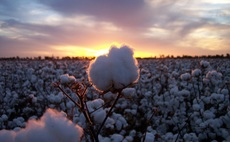 Global industry group launches to promote sustainable cotton
