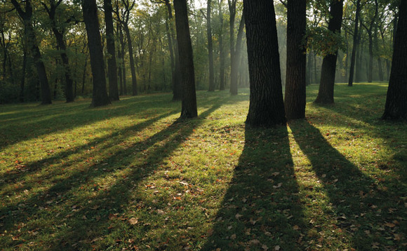 Trees are a natural carbon sink