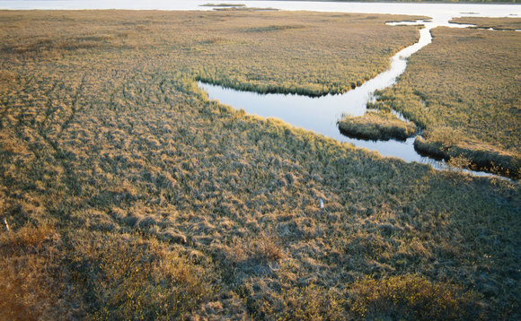 DECC dishes out reeds-to-energy wetland funding