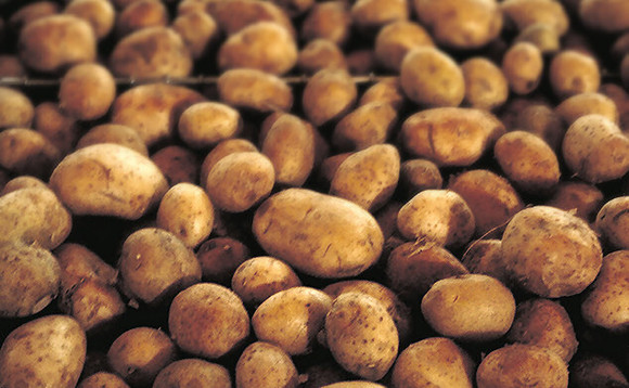 Save our spuds: Binning edible potatoes costs UK £230m a year
