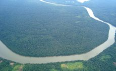 Investors worth $6.4tr call on firms to tackle supply chain deforestation risks