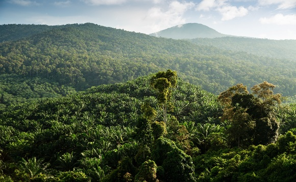 Millions of hectares of tropical forest have been cleared for palm oil plantations | Credit: RSPO