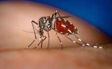 "Climate change could cause malaria to ""creep up mountains"""