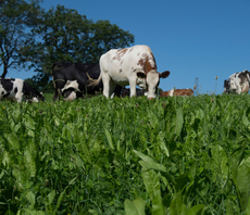 Tesco and WWF launch climate-friendly cattle feed scheme for dairy farmers