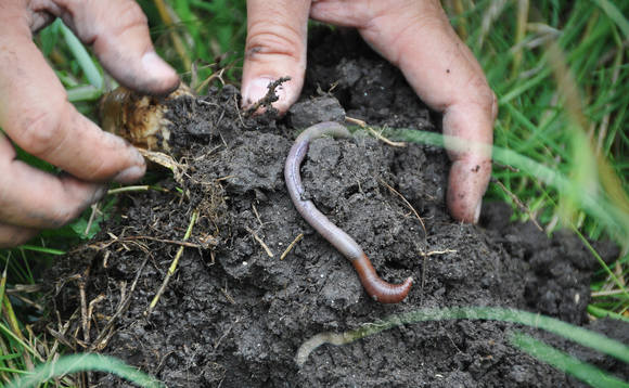 Soil health is an indicator of the health of other environmental pillars such as air and water