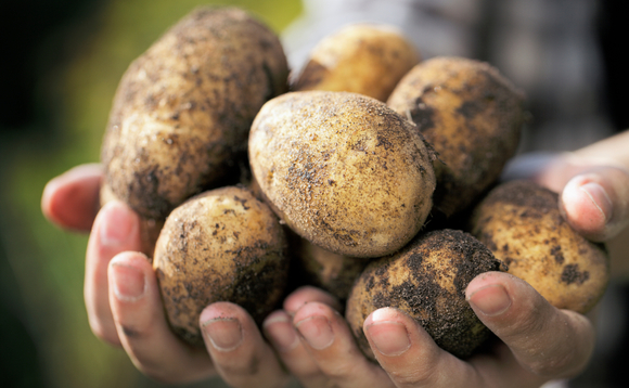Potato supplier finds wind energy a-peel-ing