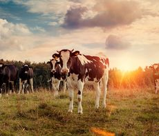 'A golden opportunity': Inside the CCC's blueprint for climate-friendly food and farming
