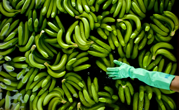 The banana boom enabled by warmer temperatures may be coming to an end | Credit: David Bebber