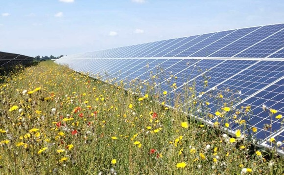 Solar farms offer biodiversity boost, study finds