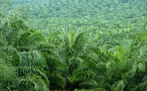 "Unilever approaches key sustainable palm oil ""staging post"""