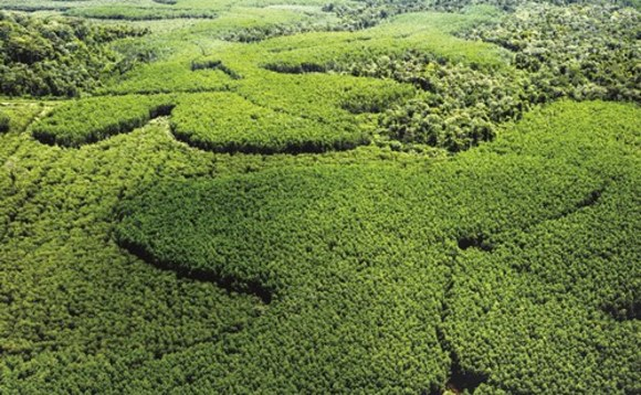 From Indonesia to Brazil forest protection is being beefed up, but are businesses doing enough?
