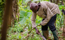 Greener chocolate part two: Helping Ghana's cocoa farmers adapt to climate change