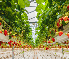 Why indoor farming funding is heating up