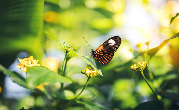 Butterflies are among the species to have benefited from the new habitat, according to the report