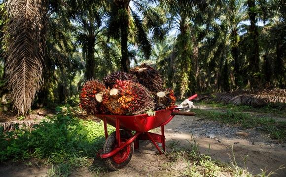 RSPO CEO's mission is to drive a sustainable palm oil supply chain - but is it an impossible task? | Credit: RSPO