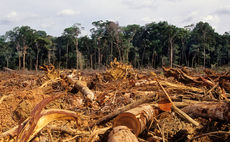 Consumer goods sector's 2020 deforestation goal 'impossible' to meet, CDP warns