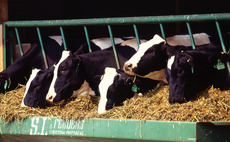 Market for methane-cutting livestock feed heats up, BusinessGreen report finds