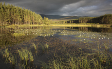 Scottish wetland and woodland. Credit: Peter Cairns, The Wildlife Trusts