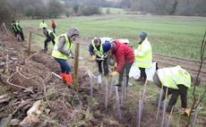 Tree planting rates fell in the UK last year