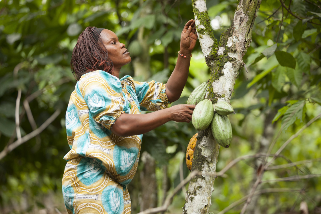 Female Cocoa Farmer  Inspecting Cocoa Trees  (Cote d'Ivoire)