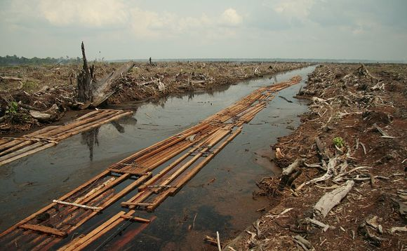 CDP: Global companies risking $941bn due to failure to address deforestation