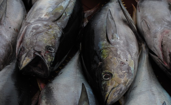 That tuna steak may not be as sustainable as you think | Credit: Mikko Koponen