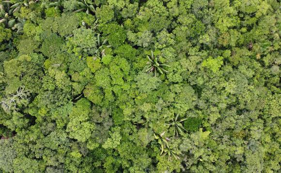Demand for forestry and afforestation projects to offset CO2 is set to surge | Credit: David Geere